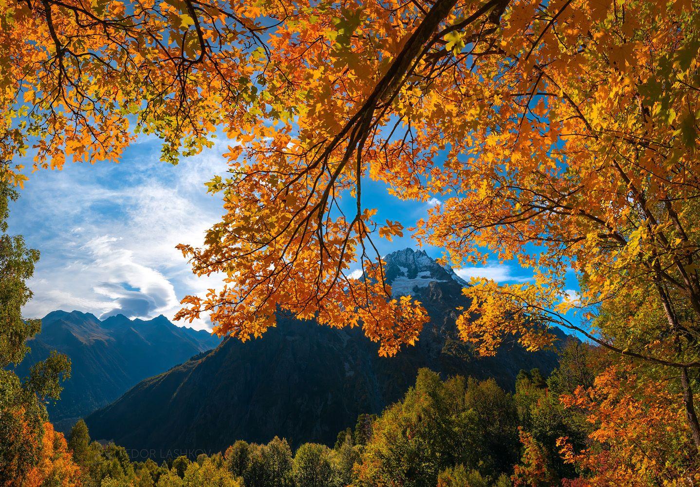 кавказ, кавказские горы, карачаево-черкесия, горы, гора, осень, клён, дерево, золотой, жёлтый, осенний, ветви, листья, вершина, пшиш, архыз, небо, синий, дневное,, Лашков Фёдор