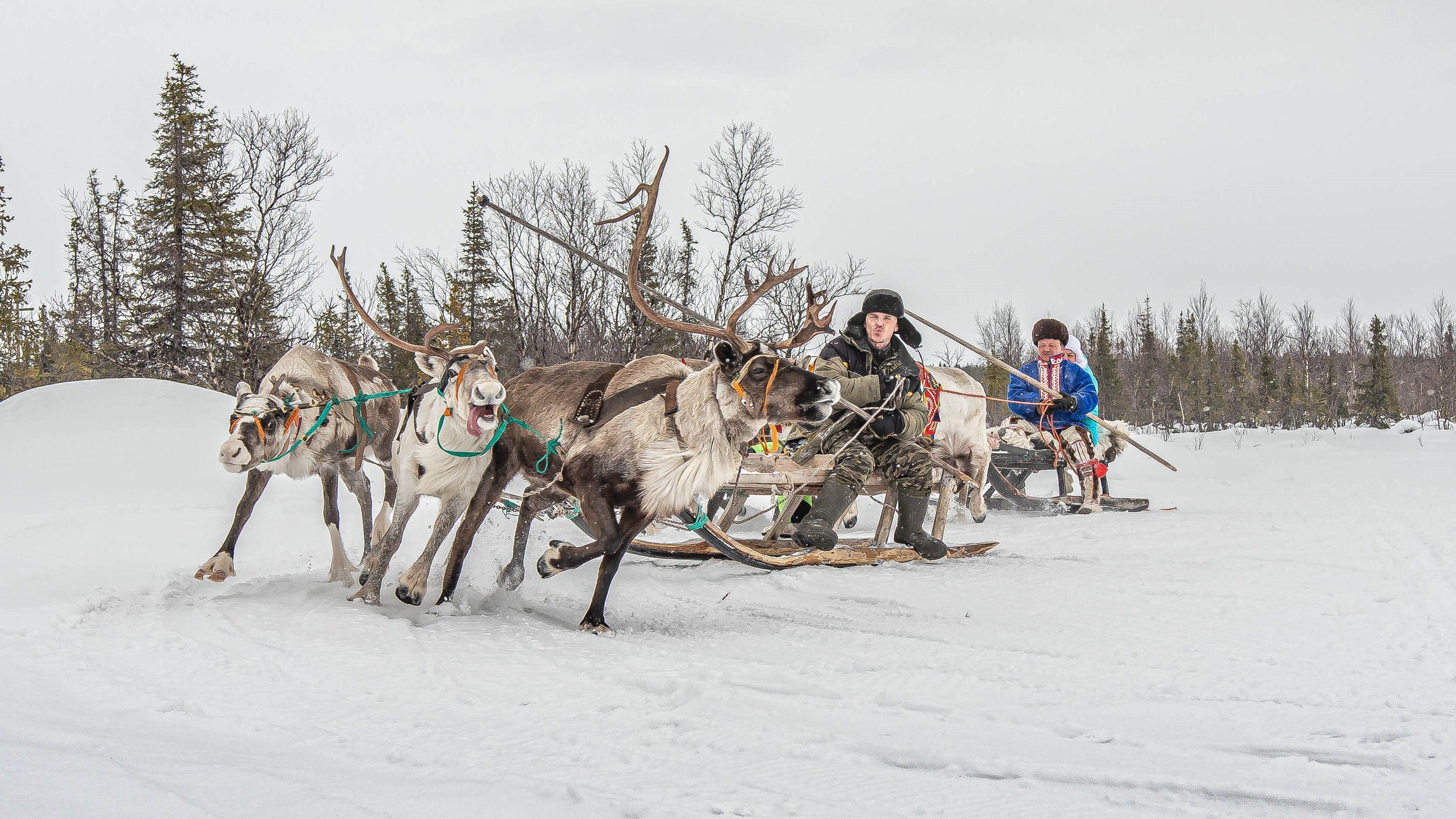 Спорт, оленеводы.Север, Kaverin Sergey