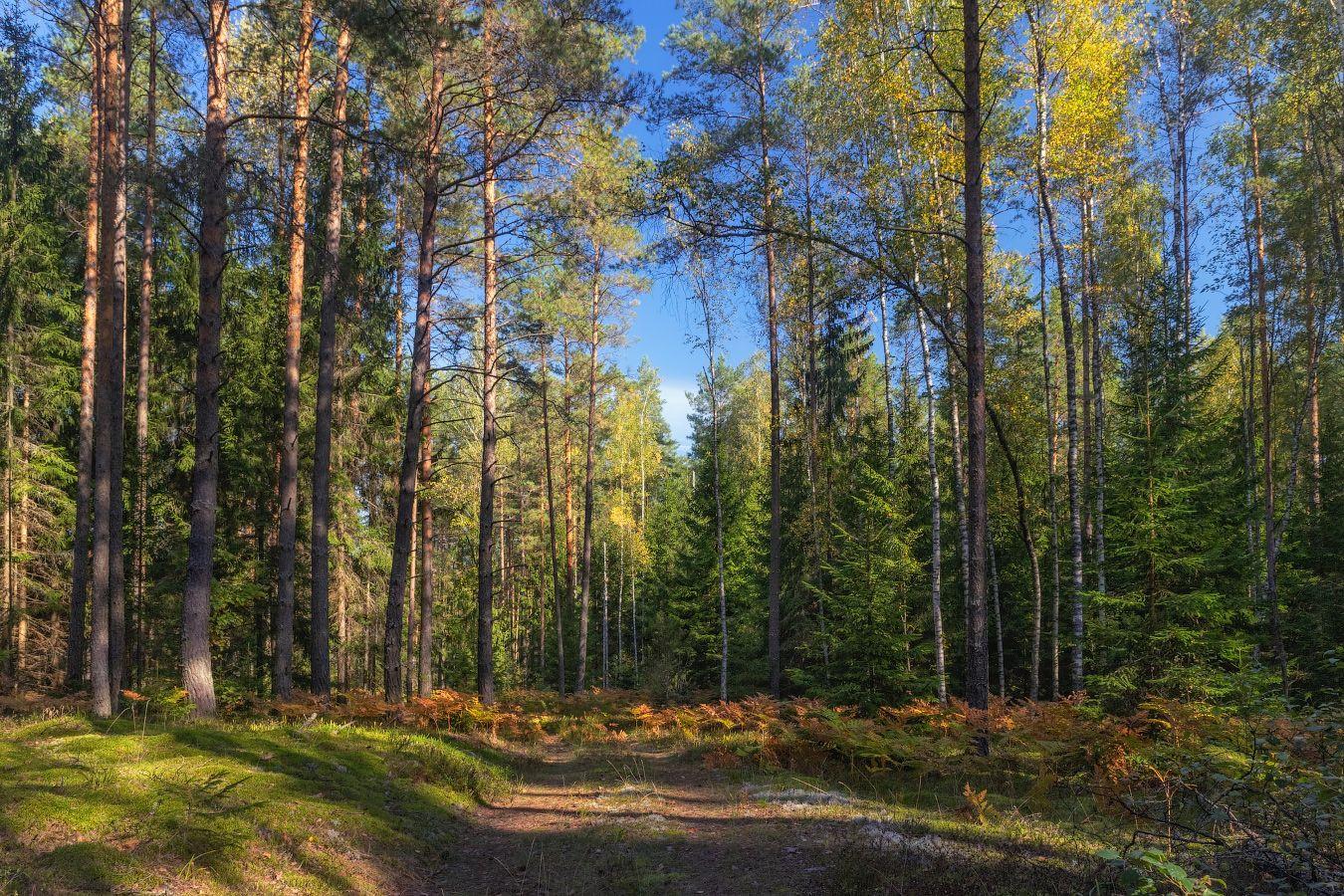 осень, лес, дорога, небо,, Сергей Шабуневич