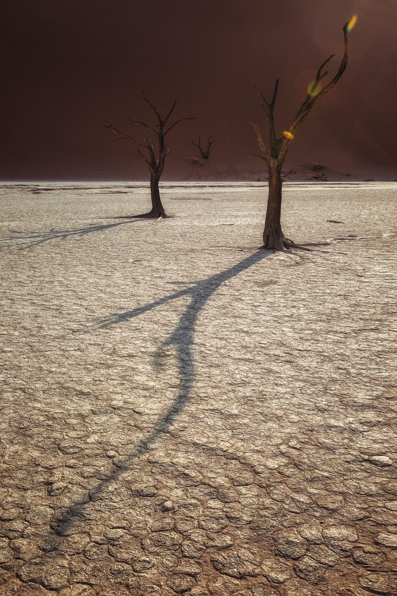 #тень, #дерево,#мертвая долина , #намибия, #африка, #дидвлей, #дюна,#озеро, #africa ,#namibia ,#tree ,#dune ,#deadvley valley ,#deadvley #lake, Деркач Наталия