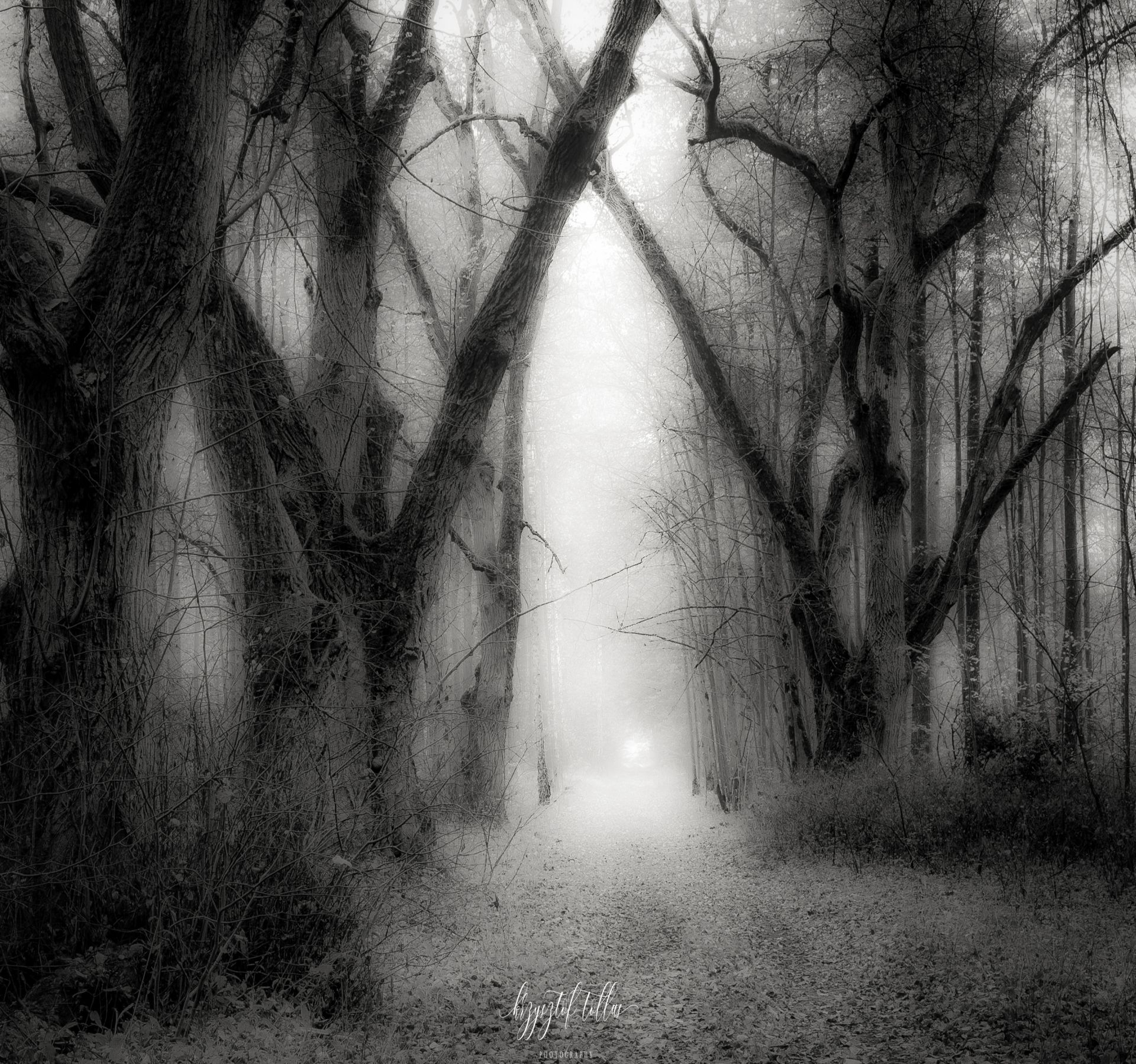 forest, autumn, nature, forest road, fog, dawn, forest atmosphere, light, leaves, old trees,, Tollas Krzysztof
