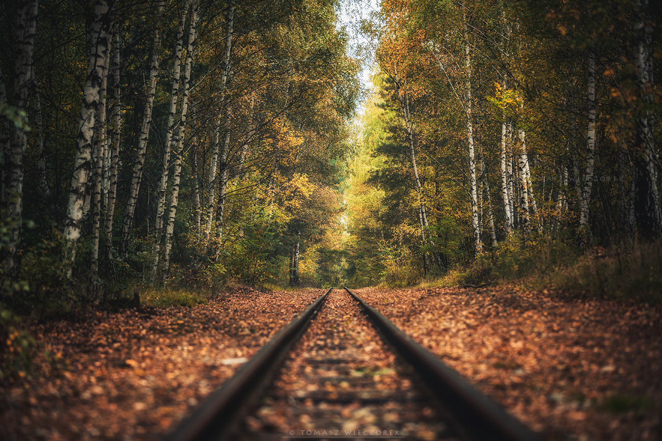 landscape, poland, light, autumn, awesome, amazing, sunrise, sunset, lovely, nature, travel, trees, railroad, leaves, colors, forest, Tomasz Wieczorek