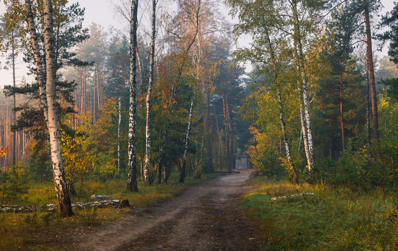 лес осень октябрь утро туман, Галанзовская Оксана