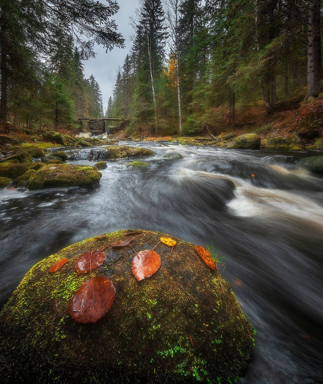 карелия, осень, лес, Марголин Алексей