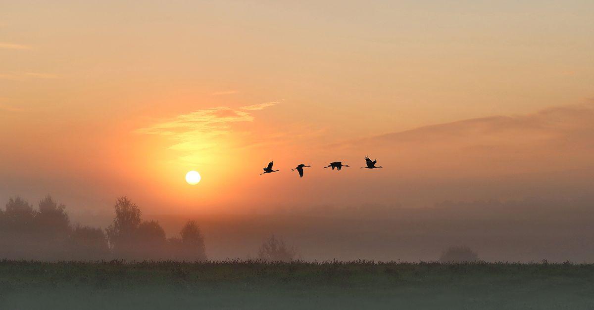 восход, солнце, журавли, Наталия Сытина