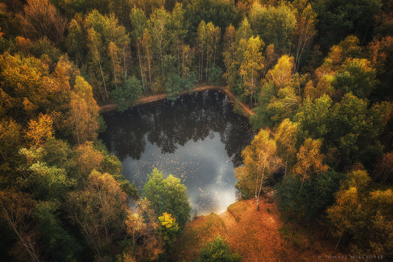 landscape, poland, light, autumn, awesome, amazing, sunrise, sunset, lovely, nature, travel, drone, trees, orange, shadows, dji, forest, square, Tomasz Wieczorek