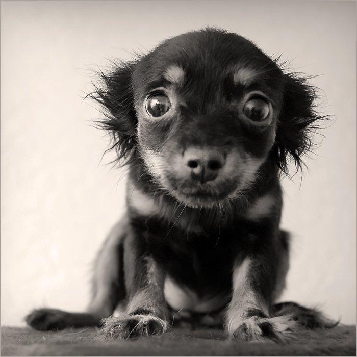 щенок, боится, камеры, 2007, Лариса Лучко