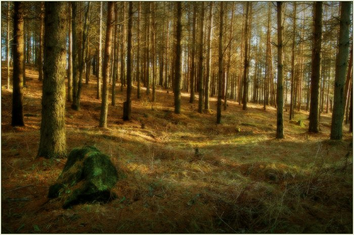 эстония, лесопарк, ягварь, 2008, Лариса Лучко