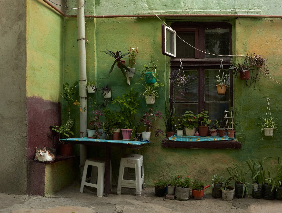 Двор, Одесса, Окно, Цветы, White