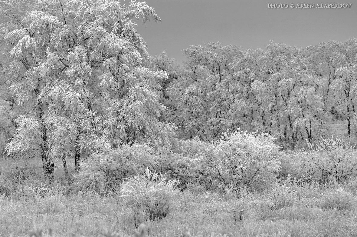 Ветки, Зима, Зимний лес, Иней, Кусты, Лес, Опушка, Снег, Холод, АрсенАл