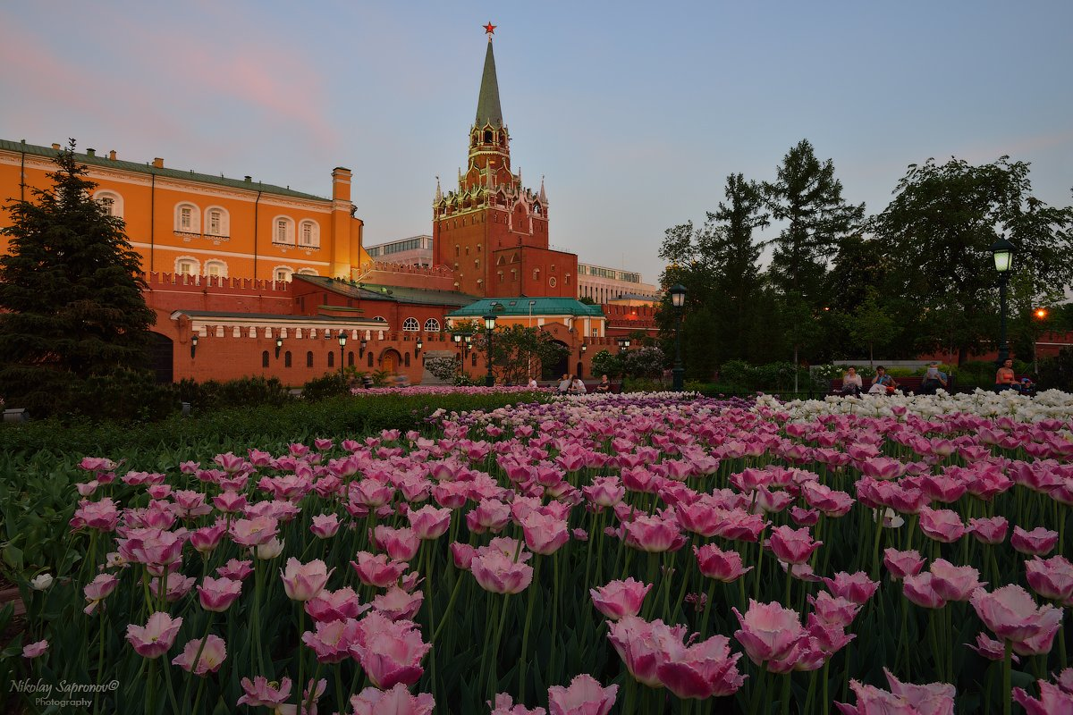александровский сад, цветы, цветочная клумба, тюльпаны, москва, цветы в москве, кремль, московский кремль, май, весна, лето, закат, вечер, вечерняя москва, Николай Сапронов