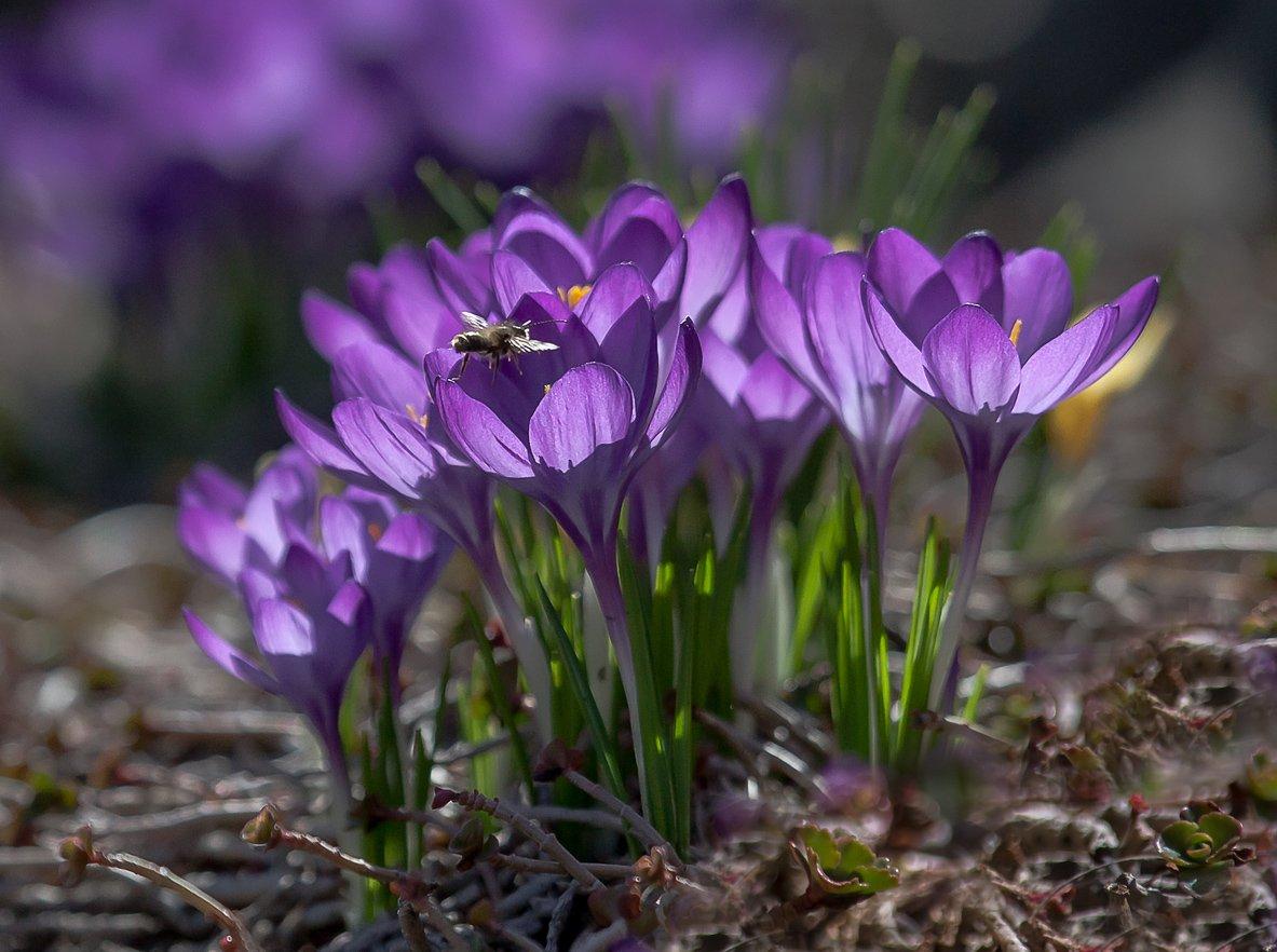 Весна, Насекомые, Природа, Флора, Цветы, Антонина