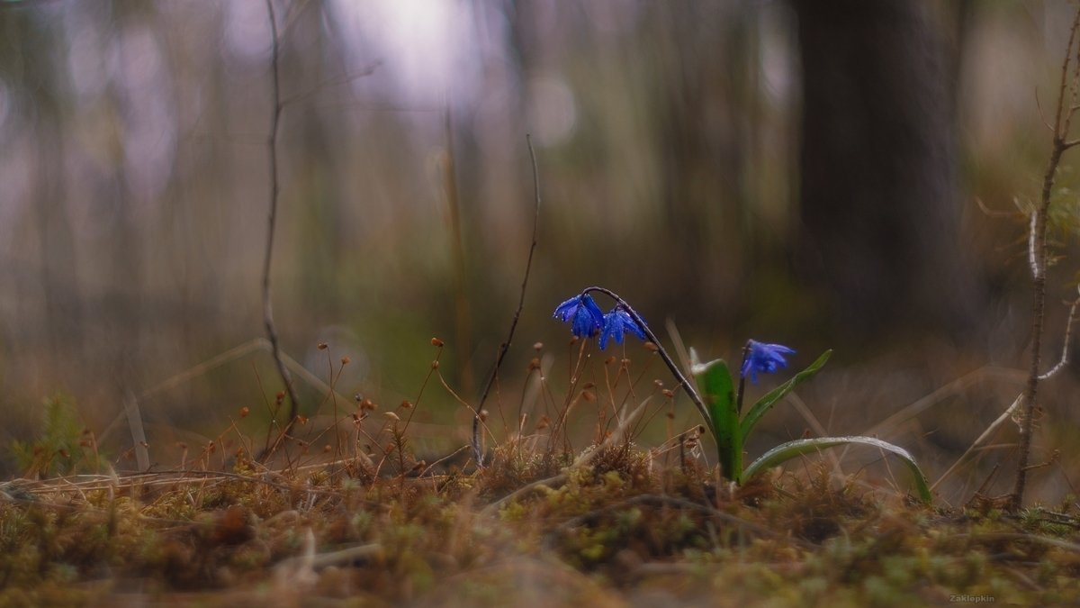 макро, цветы, Олег Зкл