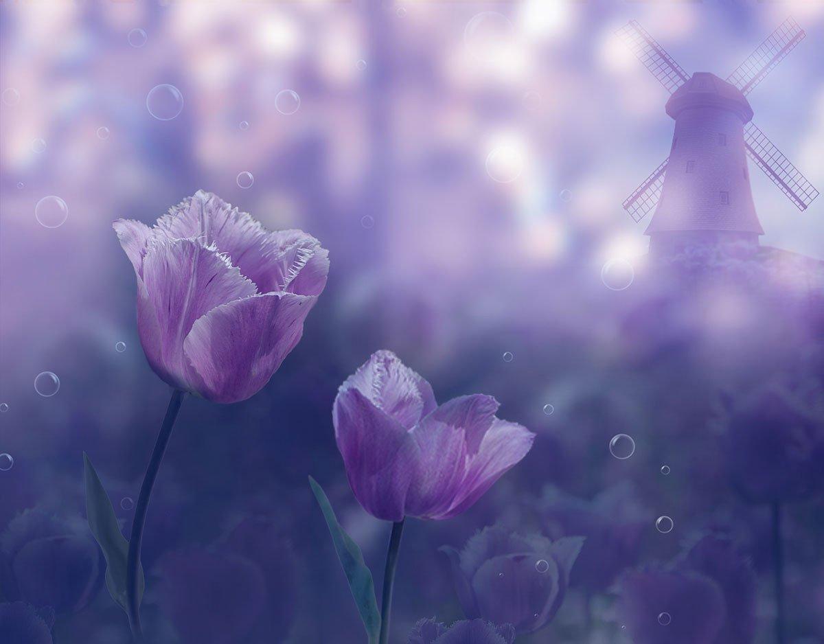 тюльпаны,мельница,, Nataliorion