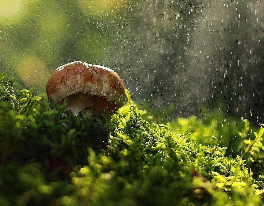 гриб, макро, мох, Олег Зкл
