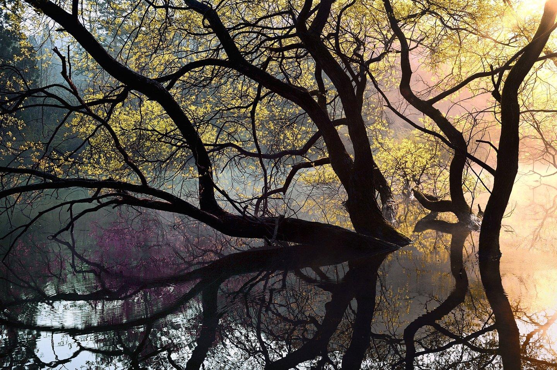 Pond of illusion, KIM SUK EUN