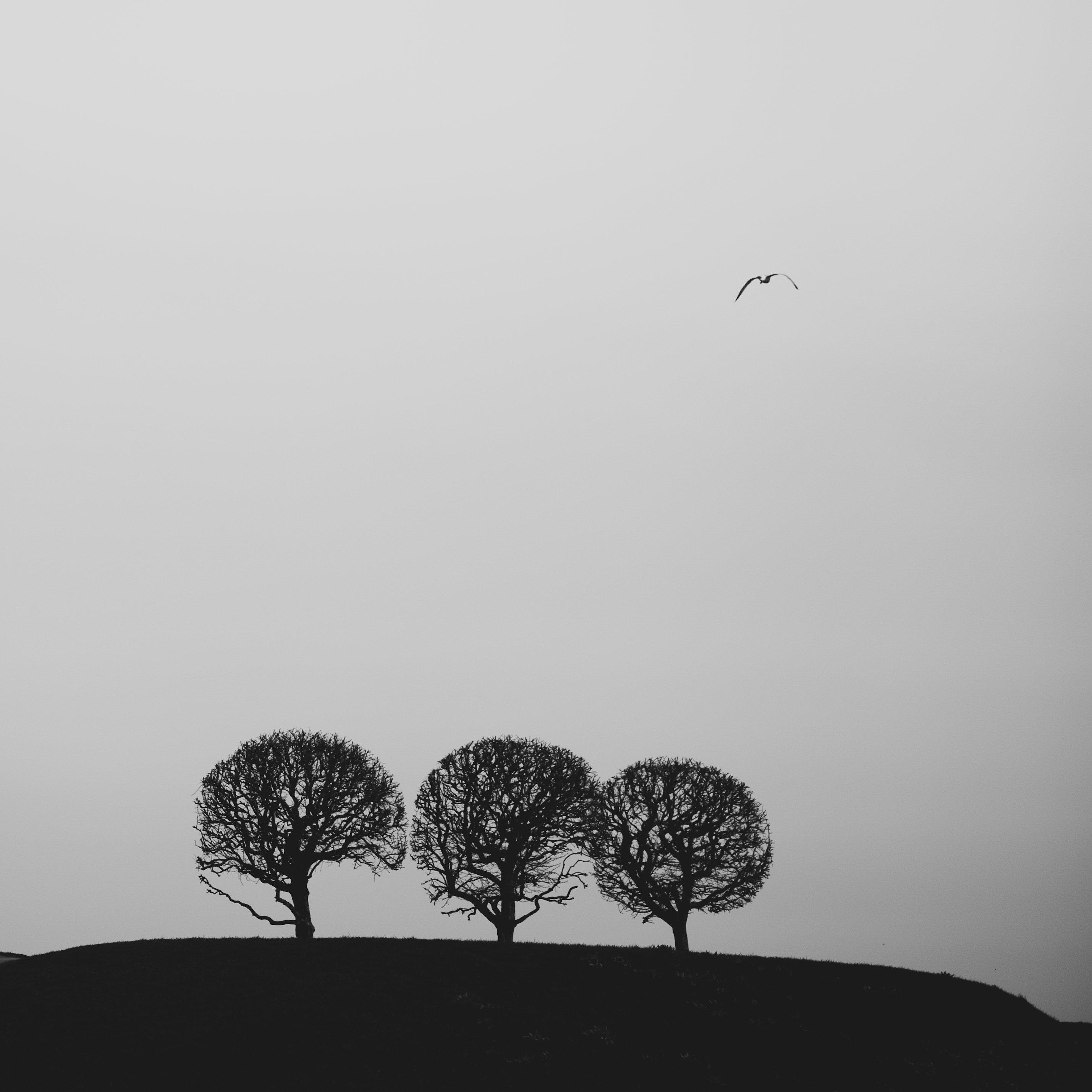 Деревья, Петергоф, Питер, Svetlana Golicyna