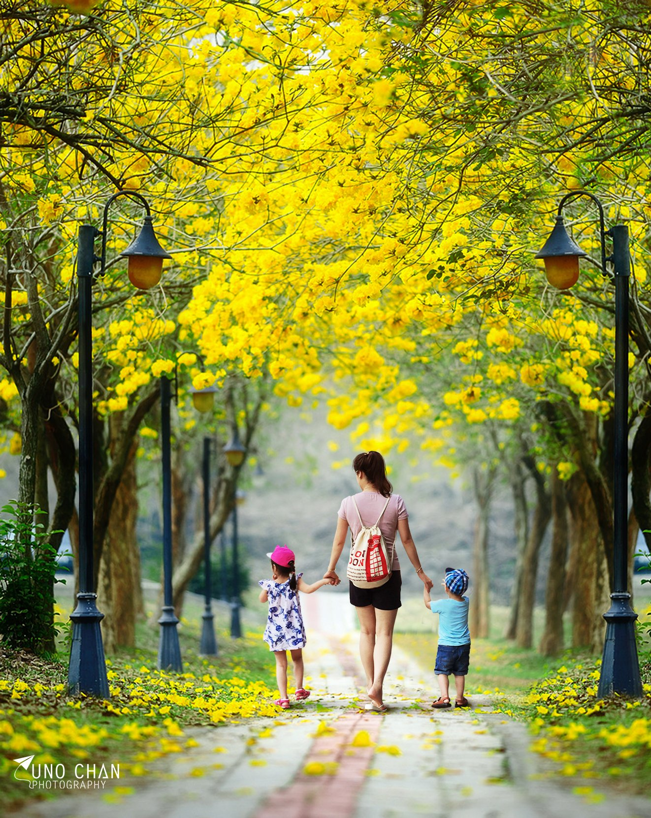 Beauty flower, Hanoi, Unochan, Vietnam, Vuonghongchan, Yellow, unochan