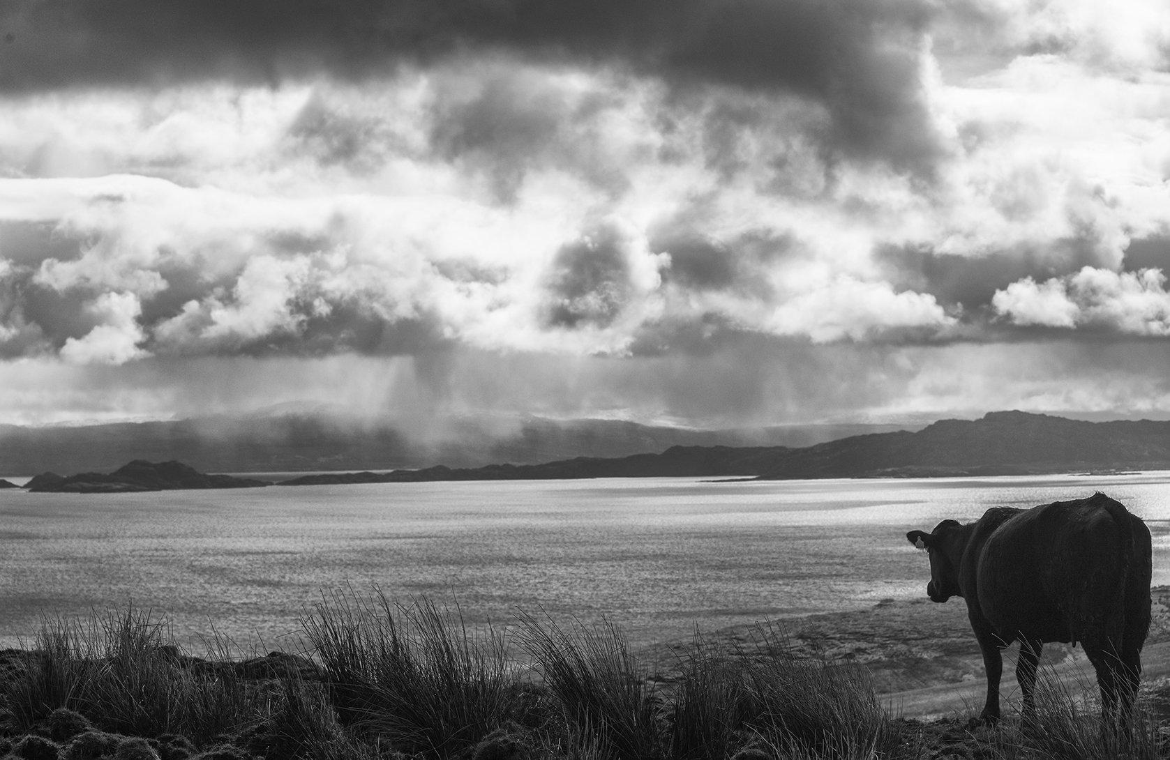 облака, залив, море, корова, погода, Boris Zhitomirsky