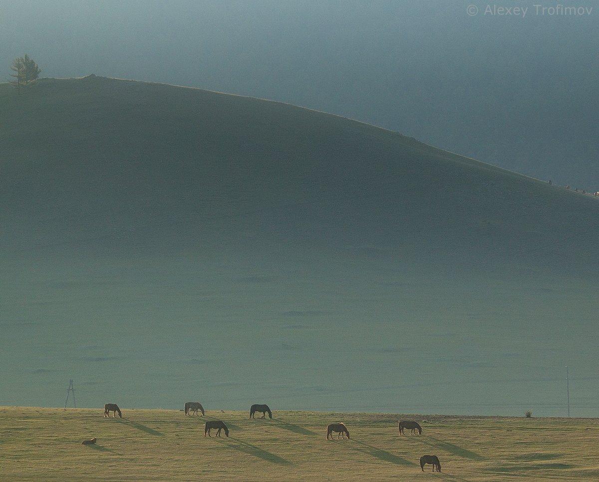 Монголия, Алексей Трофимов