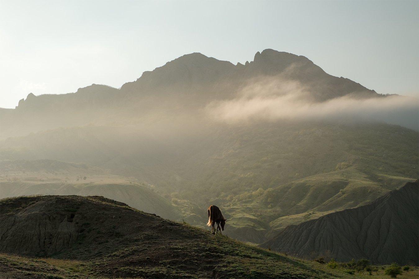 Апрель 2015, Крым, Лисья бухта, Туман, Олег Логунов