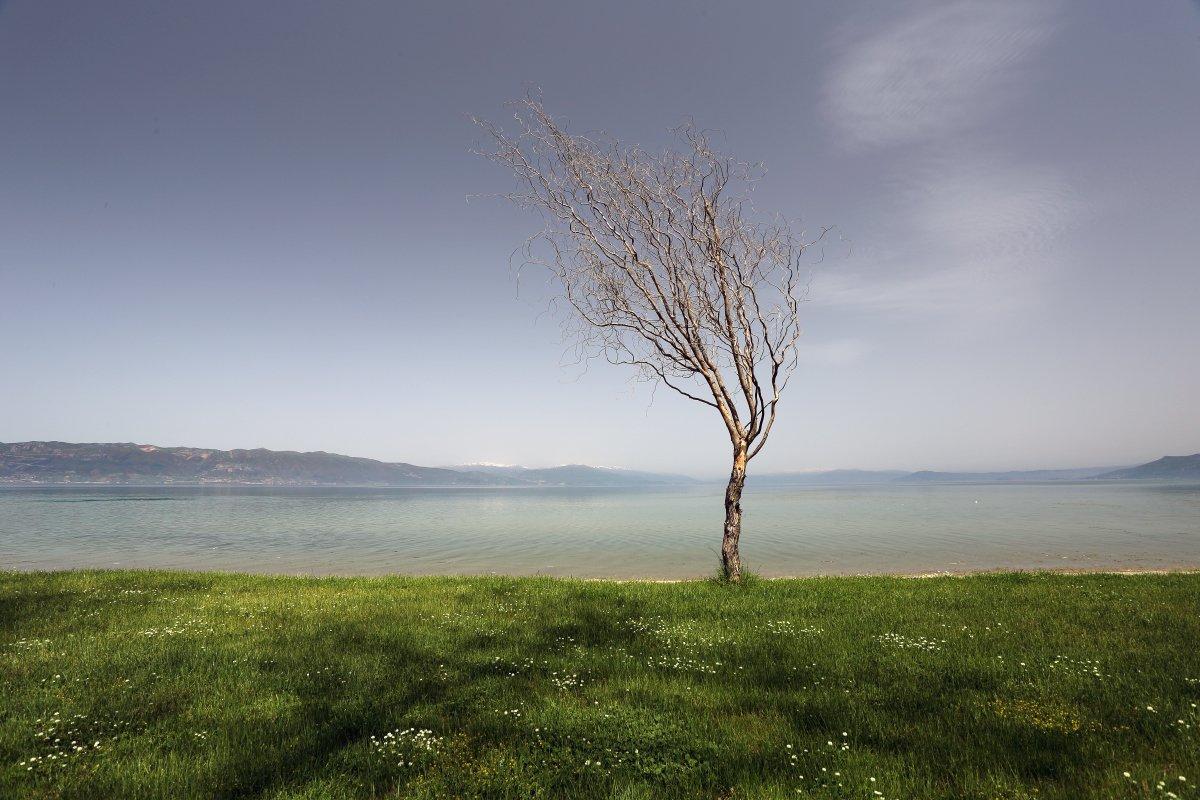 Alone, Lake, Ohrid, Sun, Tree, Александър Сандев