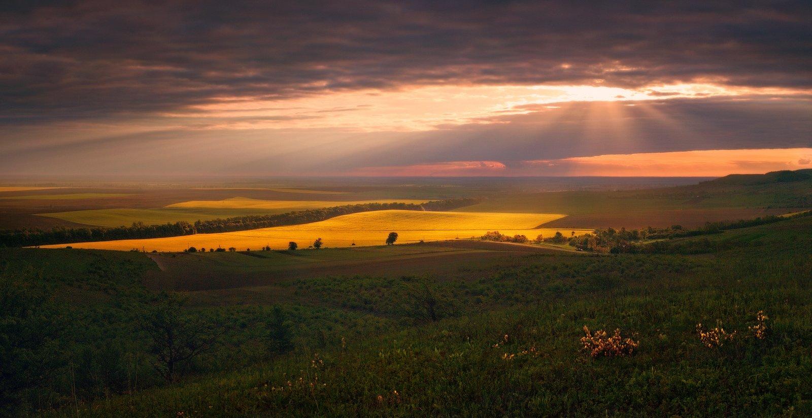 весна, вечер, май, поле, рапс, свет, Владимир