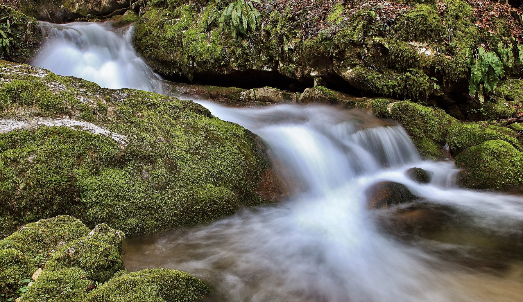 acqua,verde,foglie,movimento,, paologr63