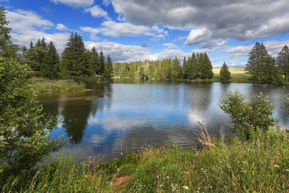 Озеро трава цветы деревья лес облака отражения лето, Георгий Машковцев