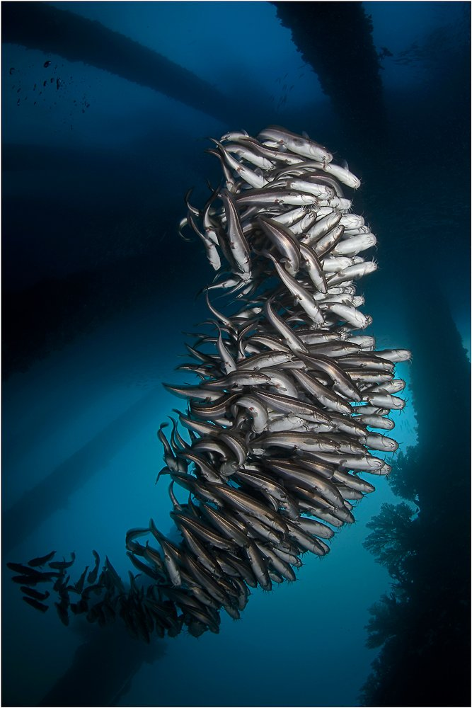 Bali, CandiDasa, Diving, Indonesia, Underwater photography, Бали, Подводная фотография, Чандидаса, Олег Федин