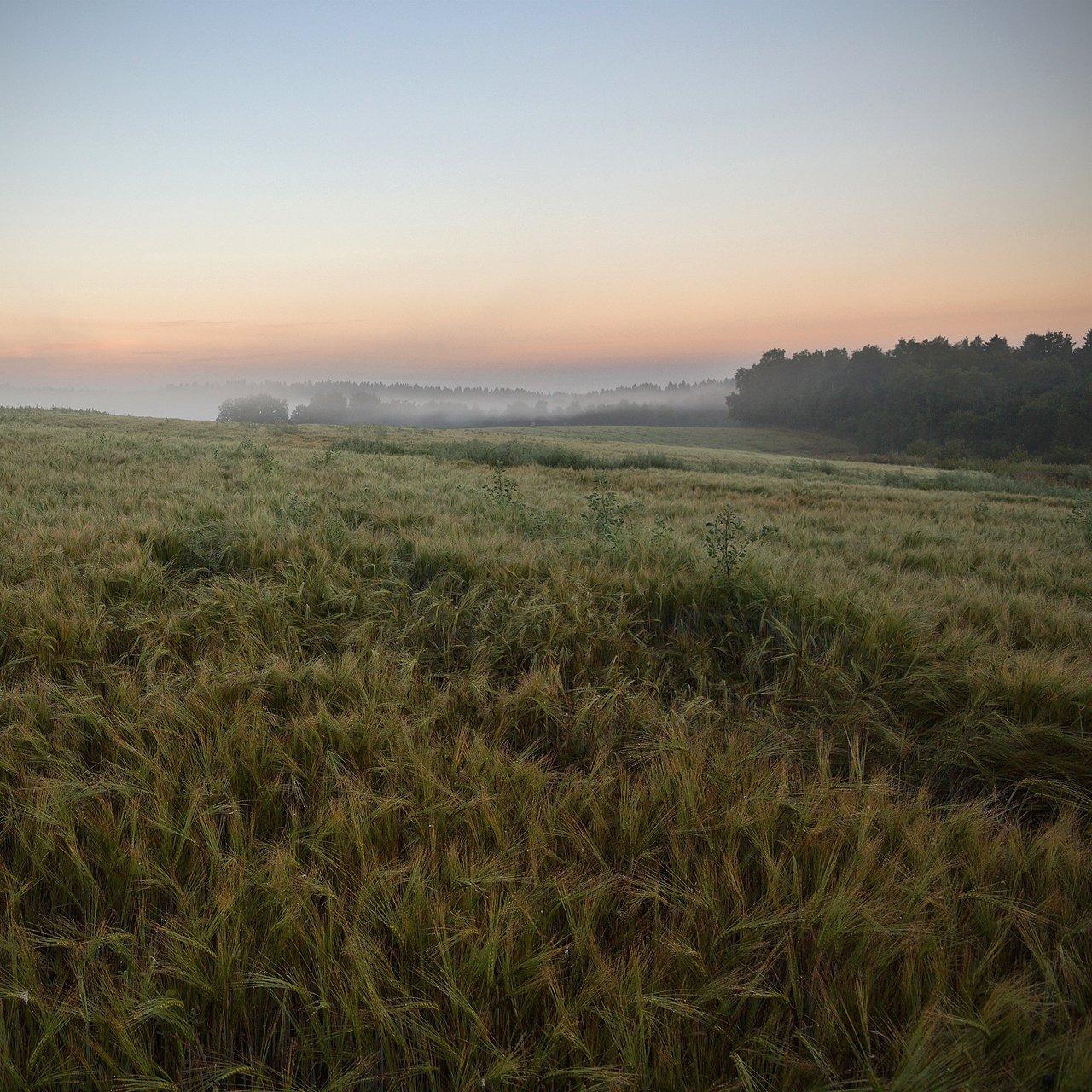 подмосковье, поле, рассвет, туман, Николай