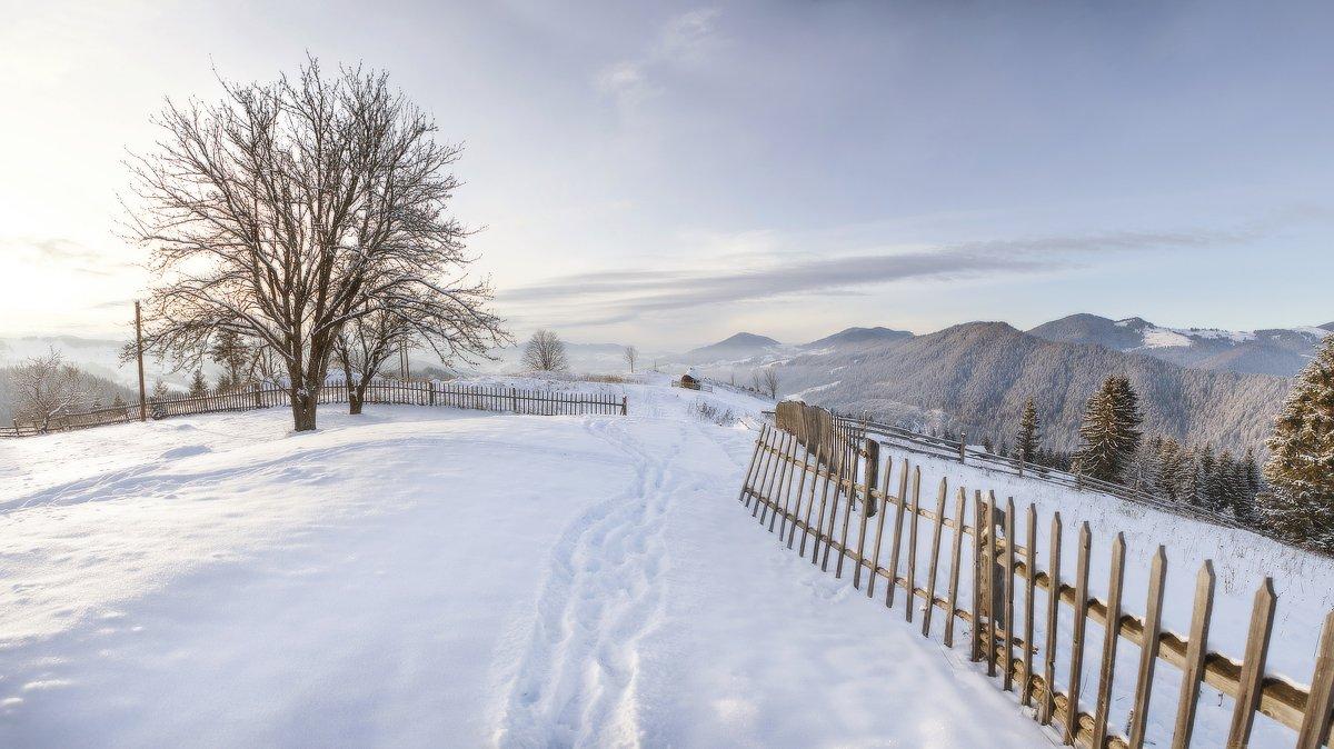 карпаты, горы, зима, снег, пейзаж, природа, панорама, дерево, вечер, украина, Piligrim