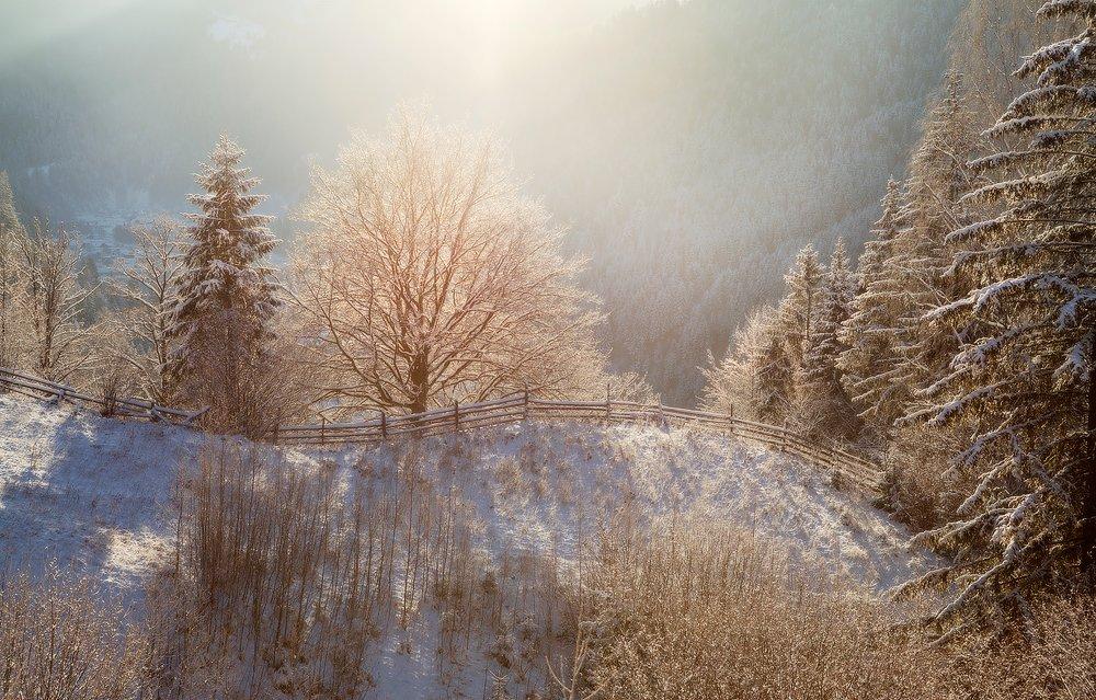 карпаты, природа, утро, дерево, пейзаж, зима, панорама, рассвет, лес, украина, Piligrim