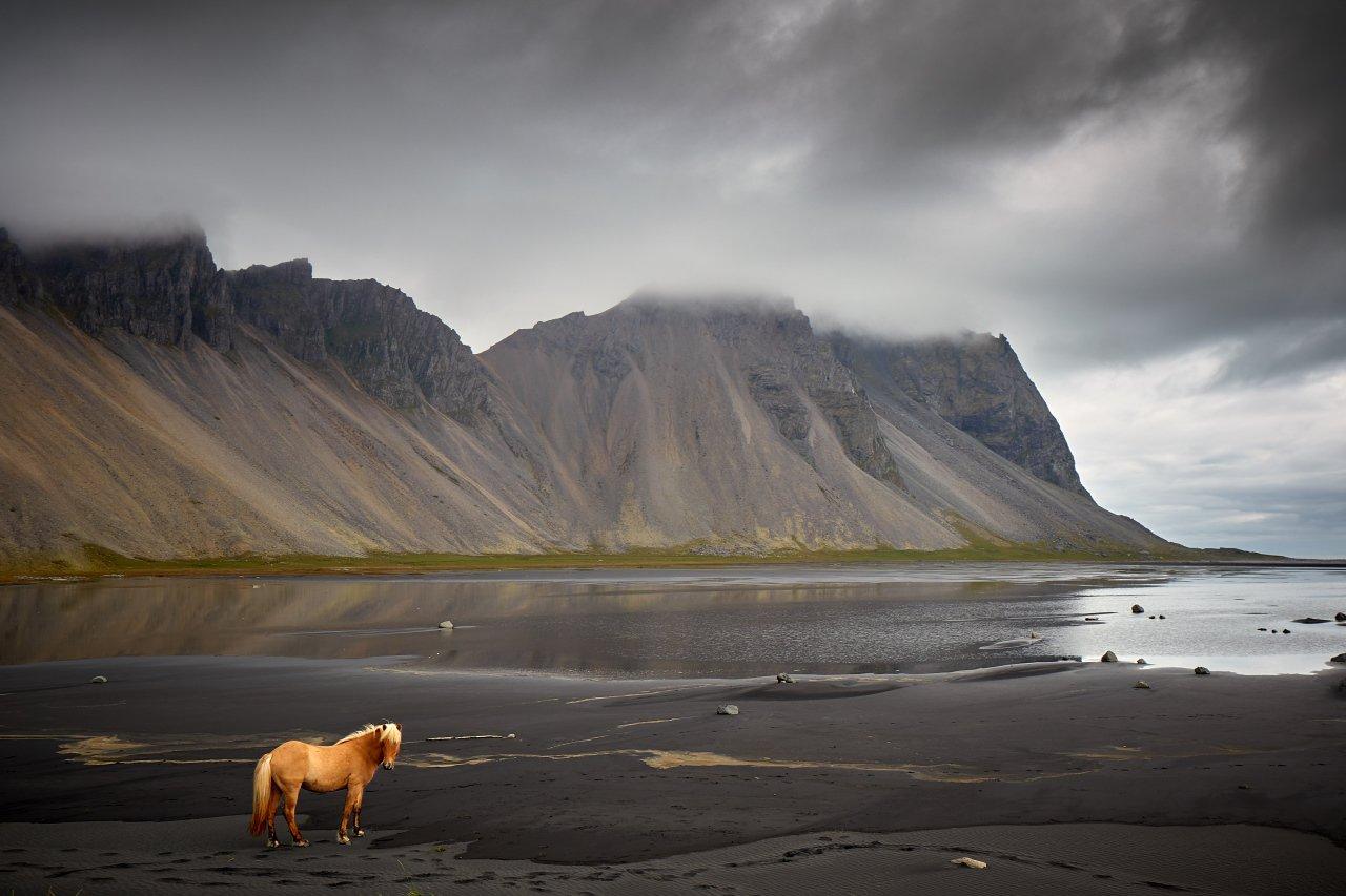 stokksness, iceland, horse, vestrahorn,, Dirk Juergensen