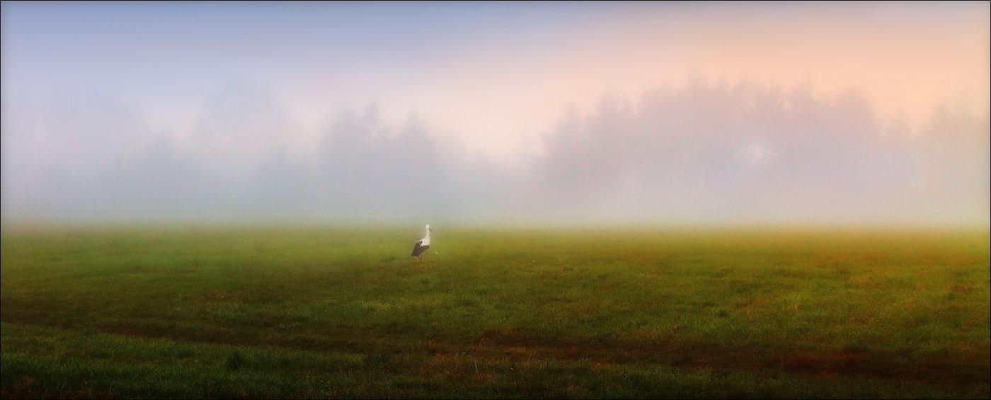 лето, туман, утро, Сергей Шабуневич