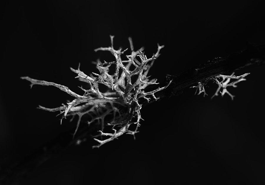 Природа, лишайники, макросъемка, монохромное изображение, Александр Кожухов