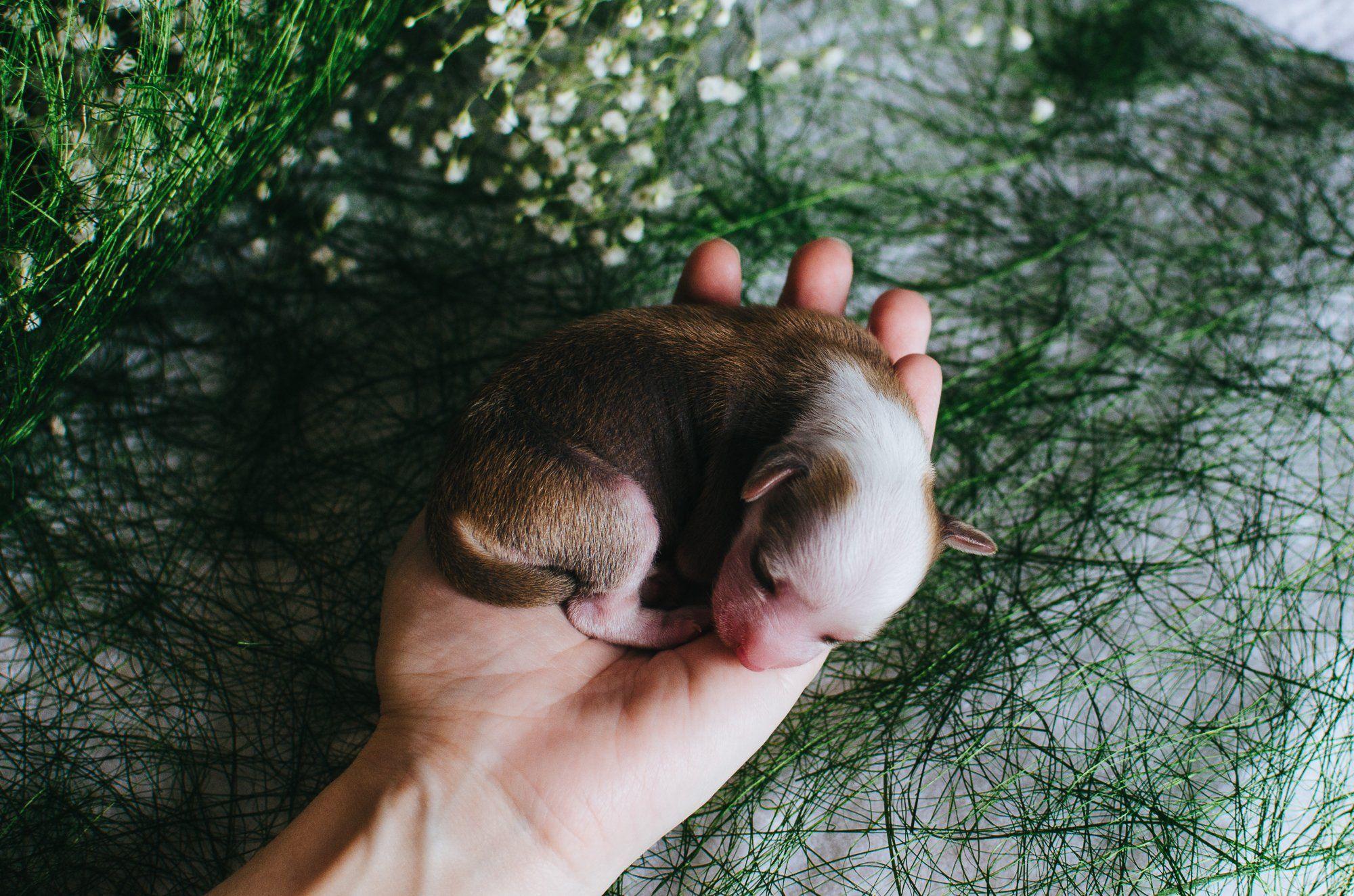 щенок, ладонь,зеленый, Юлия Булыня