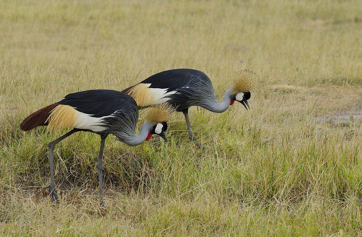 Птицы, сафари, Кения, Марина Мудрова
