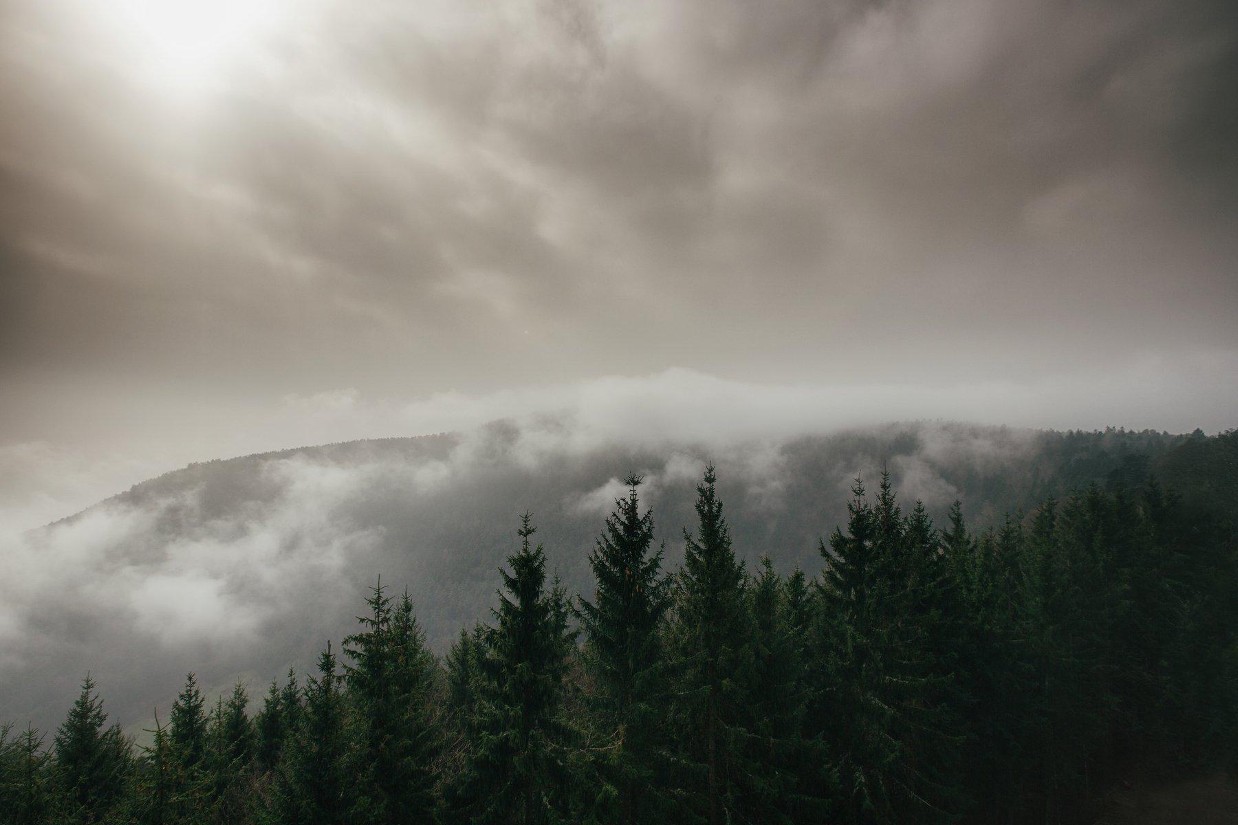 fog morning forest alone france lanscape land silent strasbourg Church otrott Mont-Sainte-Odile, Nicolai