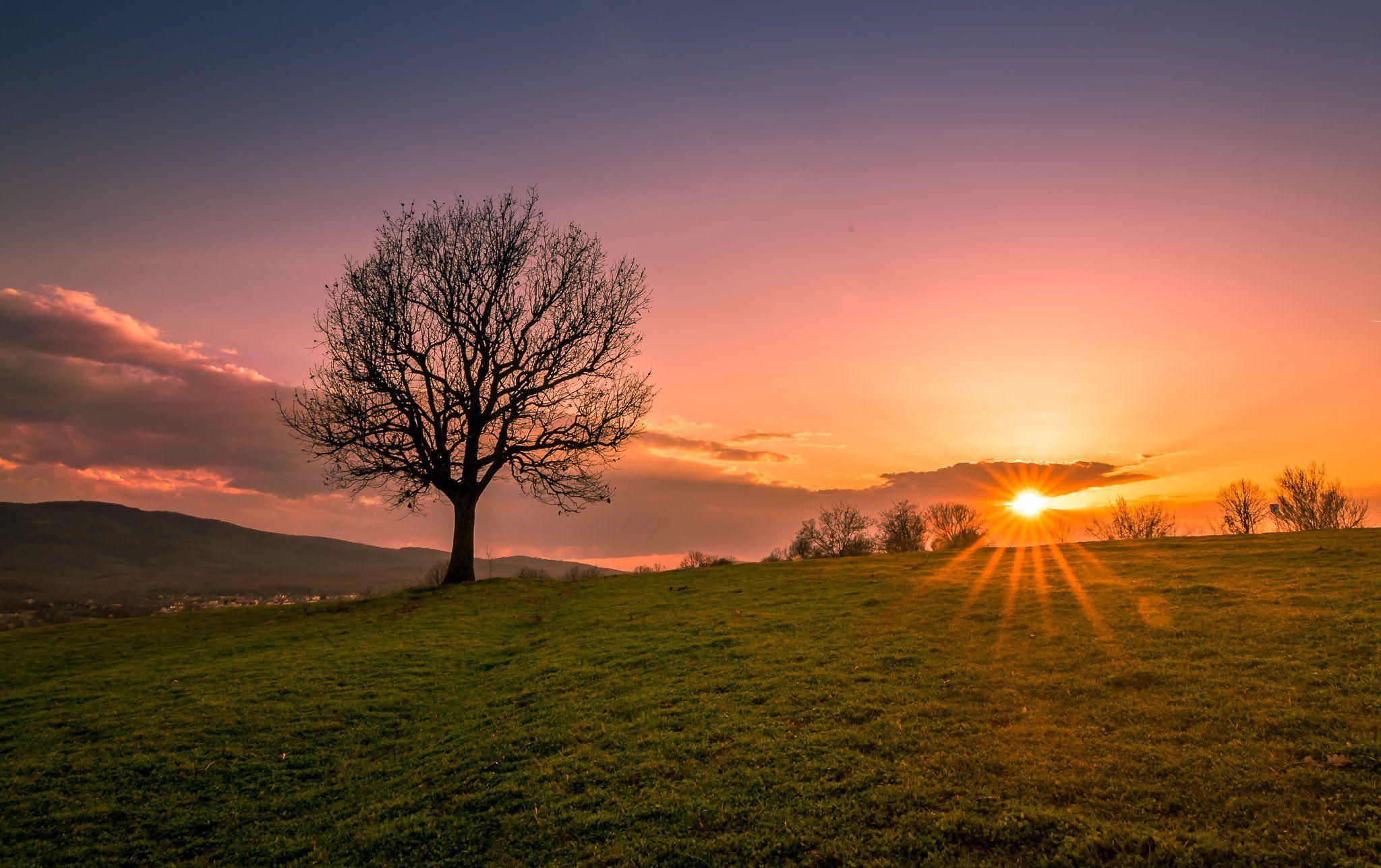sunset, tree, sun, field, green, december, sky, clouds, Jeni Madjarova
