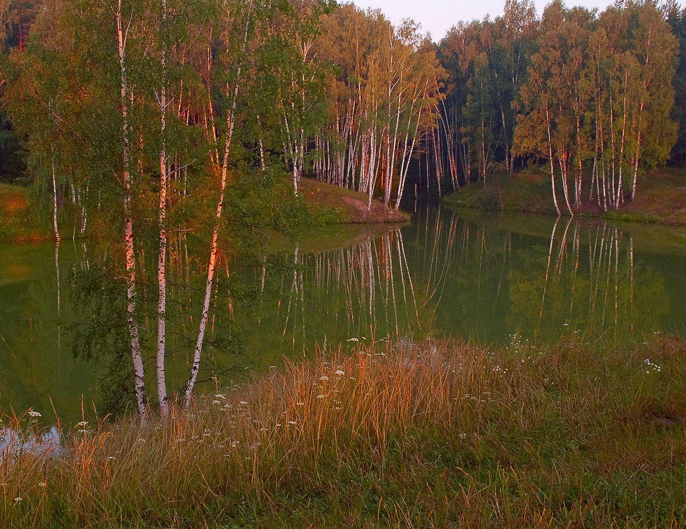 Березы, Пруд, Средняя полоса, Утро, Владимир Рябков
