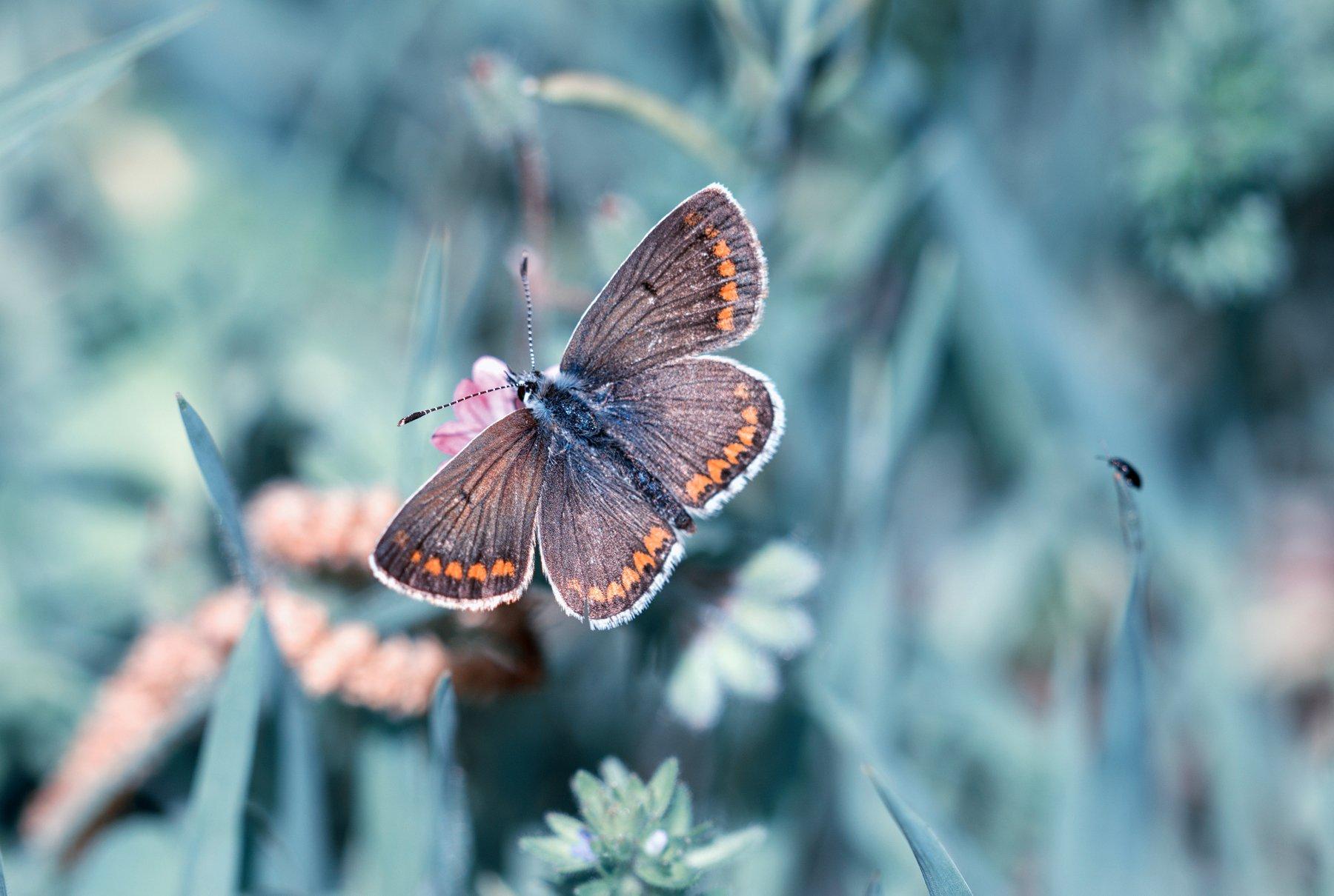 синий,лето,синийлето,summer,spring,butterfly,, Naiden Bochev