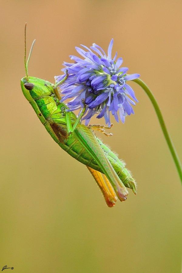 Insect, Macro, Makro, Nature, Mariusz Oparski