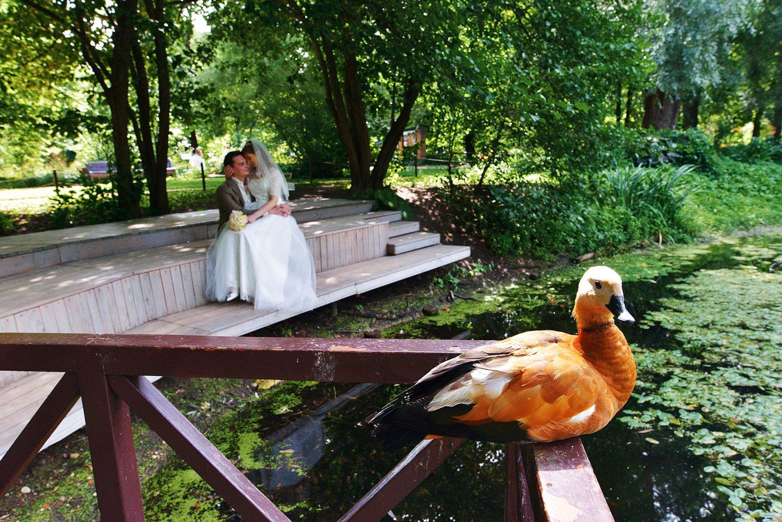 wedding, свадьба, Феофанов Дмитрий