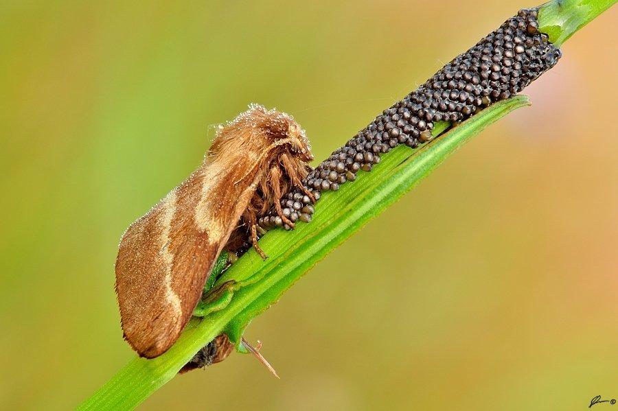 Butterfly, Insect, Macro, Makro, Nature, Mariusz Oparski