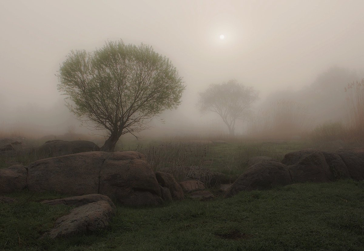 Утро. Туман. Деревья., Александр Игнатьев