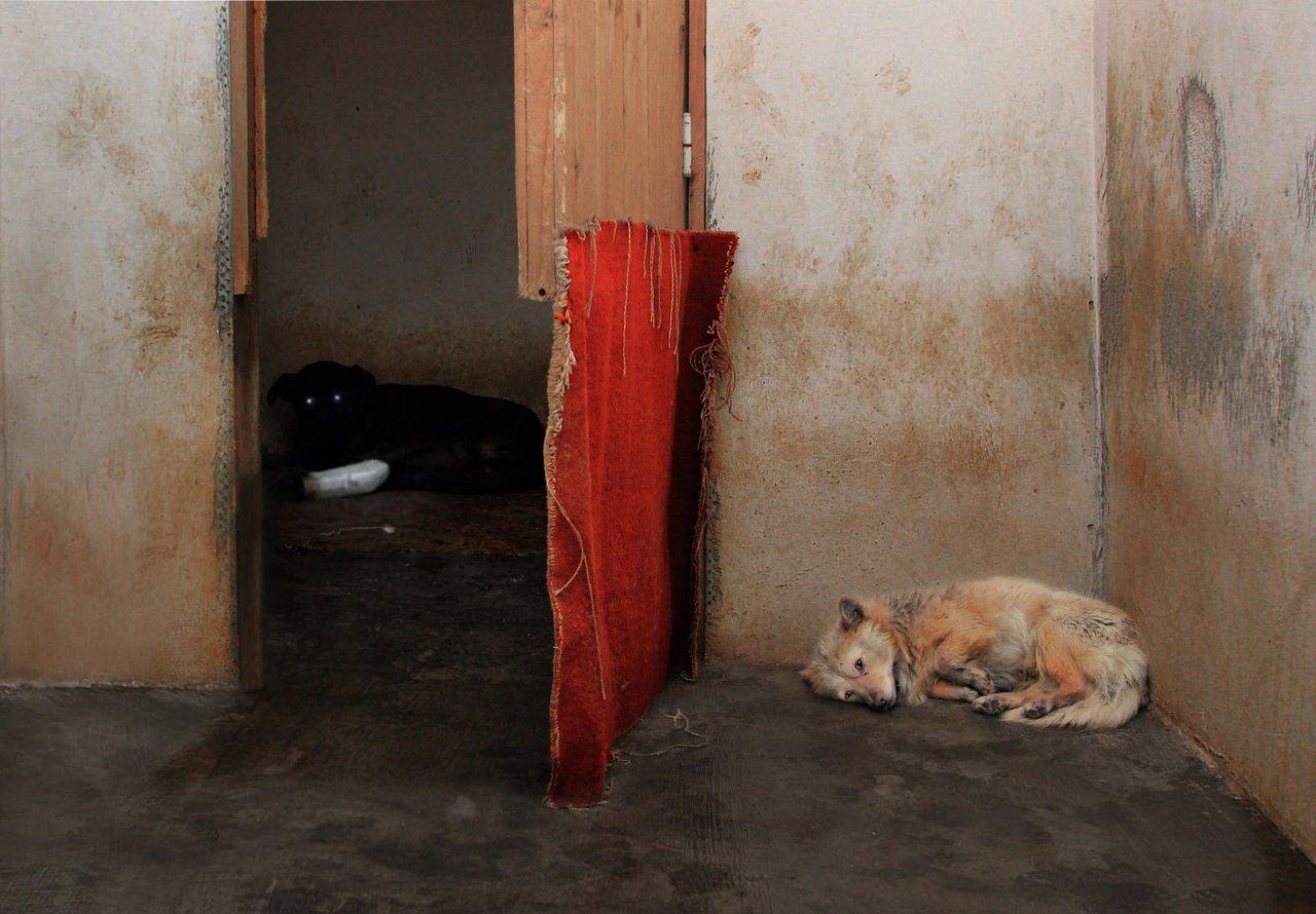собаки, животные, приют, Rita Gadar
