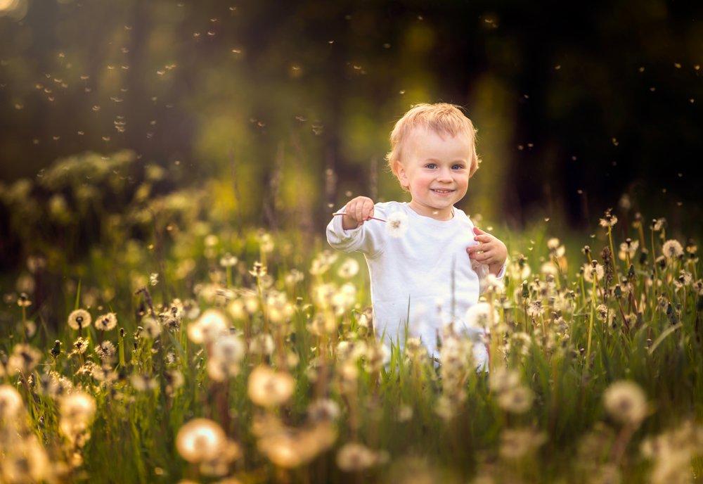 dandelions, dandelion, child , portrait, people, poland, nature, Milosz_G