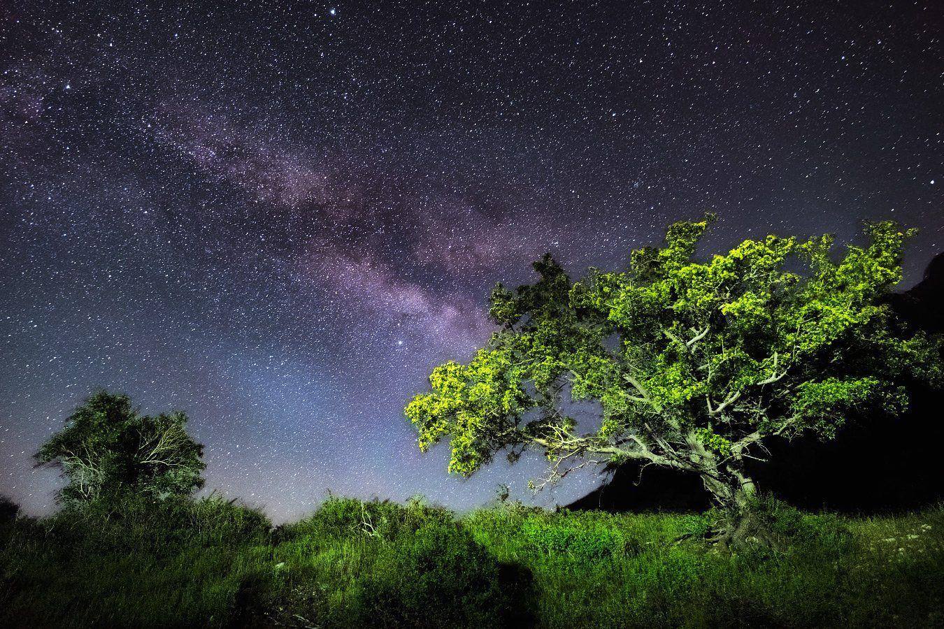 дерево, звездное небо, млечный путь, ночь, Ольга Кулакова