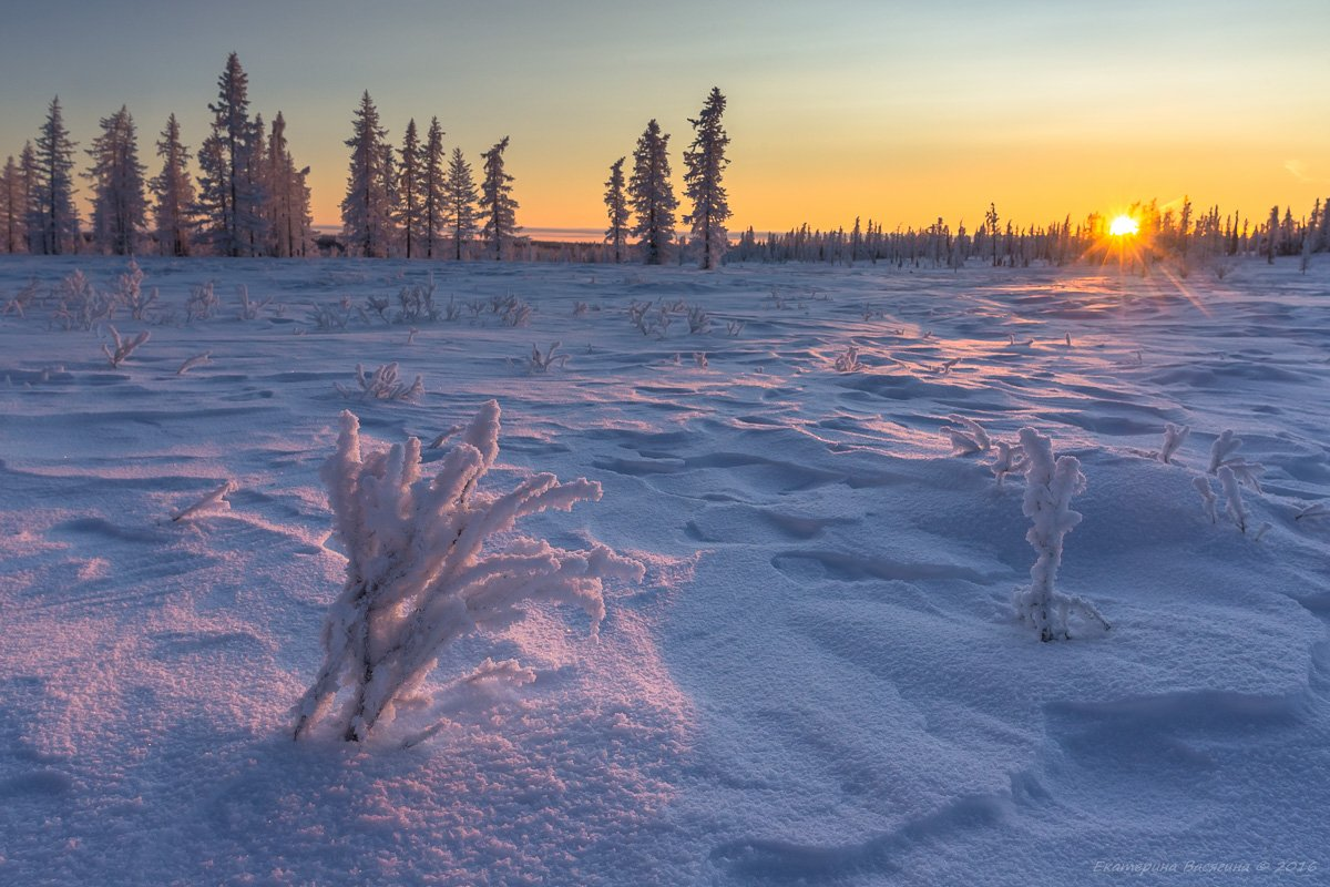 ямал, зима, Екатерина Васягина